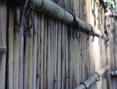 たのしい万葉集(0778): うつたへに籬の姿見まく欲り